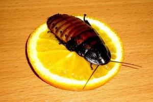 Уничтожение насекомых и грызунов с гарантией