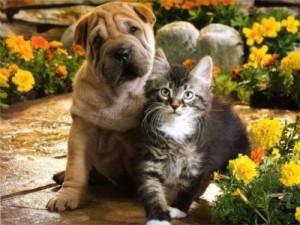 Ветеринарная помощь на дому в Питере